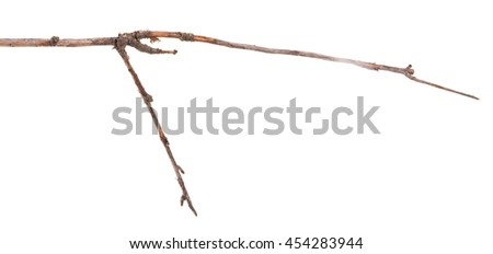dry apple tree branch isolated on white background