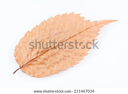 Dry Autumn Leaf - A closeup image of an old dry leaf. The beautiful patterns of the veins are visible in this pressed leaf. - stock photo
