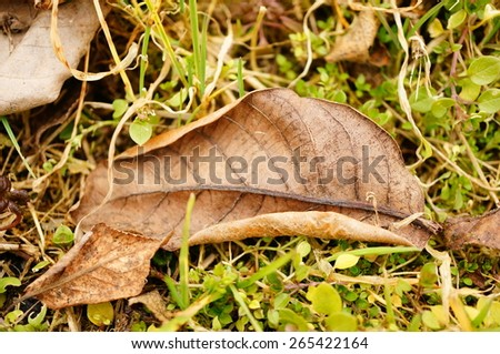 Dry autumn leaf lying on the ground