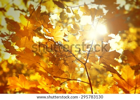 dry autumn leaf stuck in forest - stock photo
