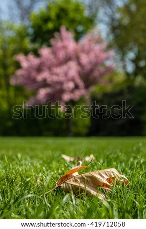 Dry autumn leaf under blooming cherry tree in public gardens - stock photo