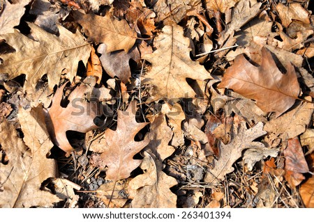 Dry autumn leaves background - stock photo