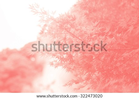 Dry autumnal leaves background, red maple tree foliage, Abstract blur and soft natural autumn background, bright yellow sun shine, autumn park, seasons change, fall nature. - stock photo