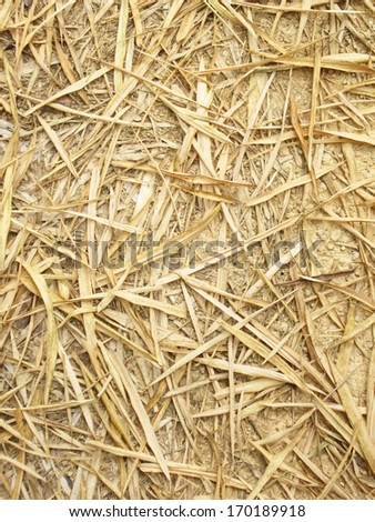 Dry bamboo leaf on the ground  - stock photo
