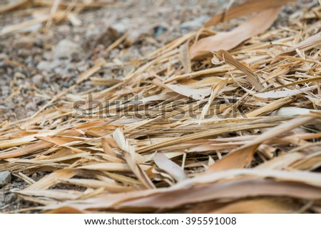 dry bamboo leaf on the ground.