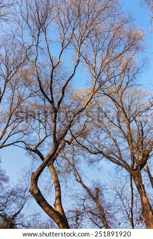 Dry, bare trunks and branches of the tree tops attract strict picturesque creative. As a basis for design - stock photo