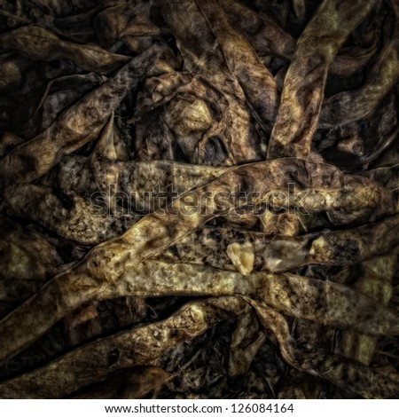Dry bean pods on a Compost Heap/Artistically alienated to create a grungy somber atmosphere. - stock photo