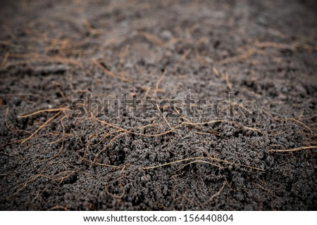 dry black soil as background (shallow depth of field)