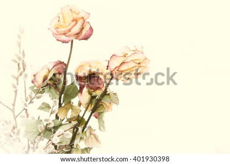 Dry bouquet of roses. Fading rose.  - stock photo