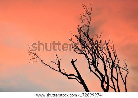 Dry branch in sunset light, horizontal - stock photo