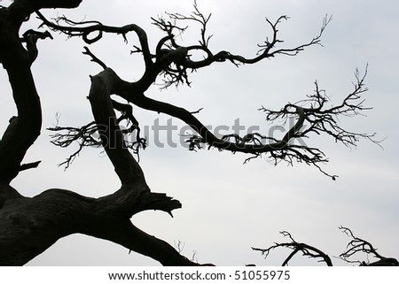 dry branch of tree in the park - stock photo