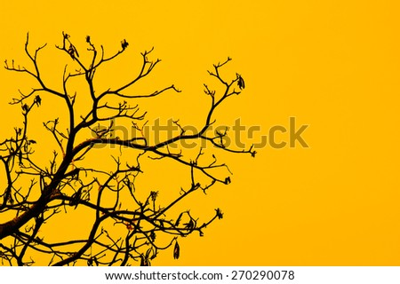 dry branch on yellow background