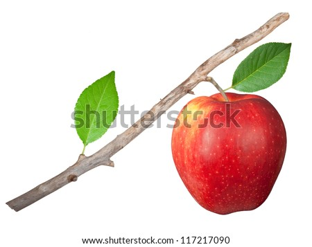 Dry branch with apple - stock photo