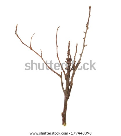 dry branches isolated on white background (with clipping path) - stock photo