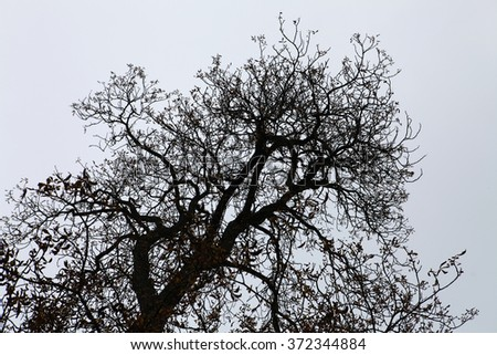 dry branches of black tree in the light sky - stock photo