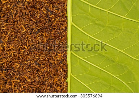 Dry brown smoking tobacco on  the background of the back side of green tobacco leaf, macro - stock photo