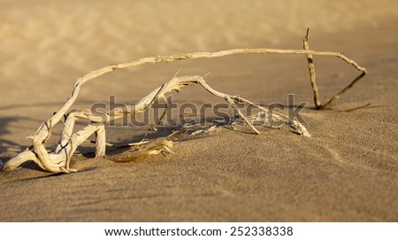 dry bush in the desert in UAE - stock photo