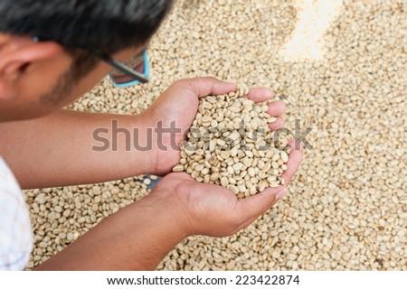dry coffee beans in farmer hand at plantation on Pha Hi mountrain, Chiangrai Thailand - stock photo