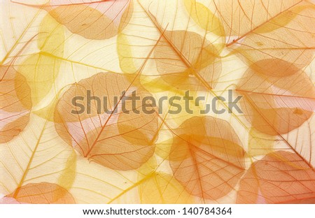 Dry colored leaves - background - stock photo