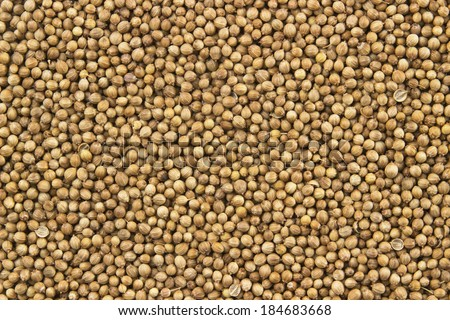 dry coriander seeds food pattern