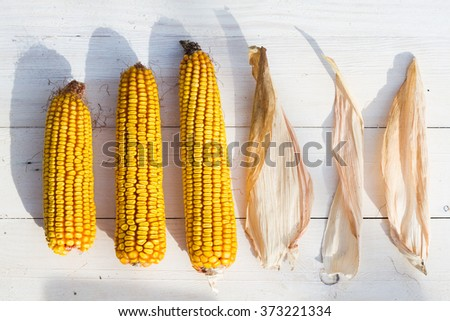 dry corn on white wooden background. - stock photo