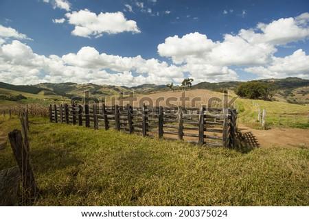 Dry cornfield under a blue sky in Brazil. - stock photo