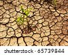 Dry cracked earth with plant struggling for life, drought, background - stock photo