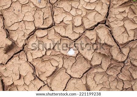 Dry cracked soil closeup before rain - stock photo