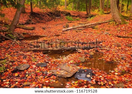 Dry Creek Bed Full of Red Leaves at a Local Park in the Fall - stock photo