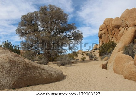 Dry Creek Bed in Joshua Tree National Park California