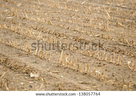 Dry cultivated land with dead plants and soil - stock photo