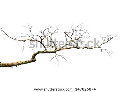 dry dead branch isolated on white background - stock photo