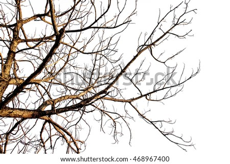Dry dead tree  isolate white background