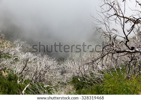 Dry dead trees in foggy mountains - stock photo