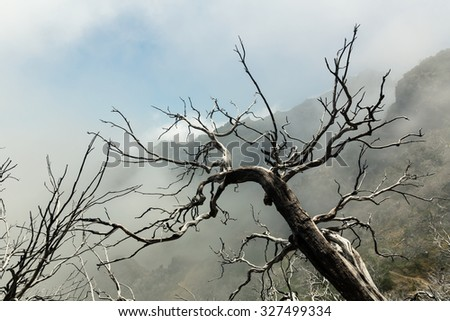 Dry dead trees in foggy mountains. Toned image - stock photo