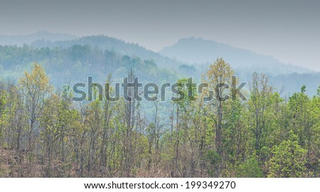 Dry deciduous forest recovered after fire - stock photo