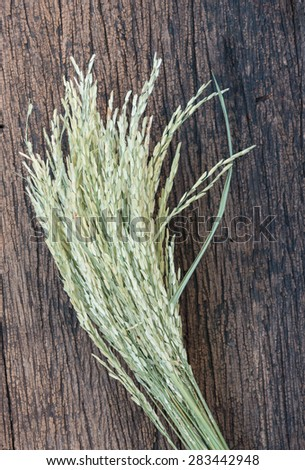 Dry ear of rice on wood background