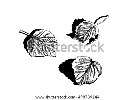 Dry fallen leaves of birch.  Hand drawing isolated objects on white background