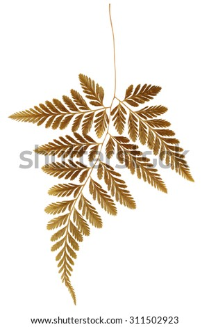 Dry Fern Leaf on White Background