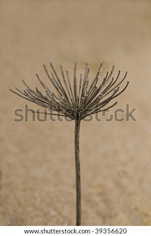 dry flower in the sand
