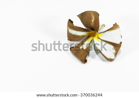 dry flower isolated on white background