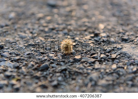 Dry flower on the ground in a beautiful,select focus