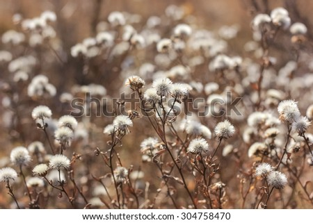 Dry flowers in meadow in autumn