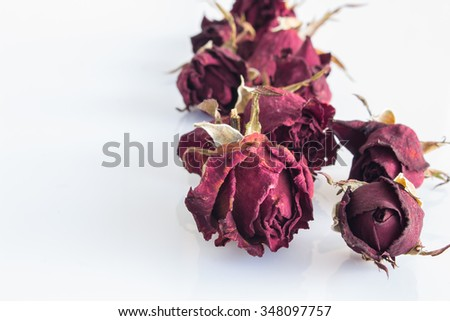 Dry  flowers isolated on white background, with soft  focus. Focusing on the foreground.