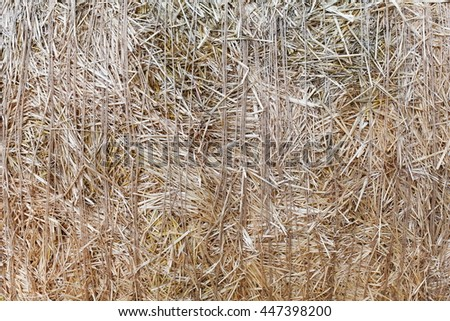 Dry golden yellow straw closeup. Farming harvest background. Agricultural pressed thatch wall texture. Abstract natural pattern - stock photo