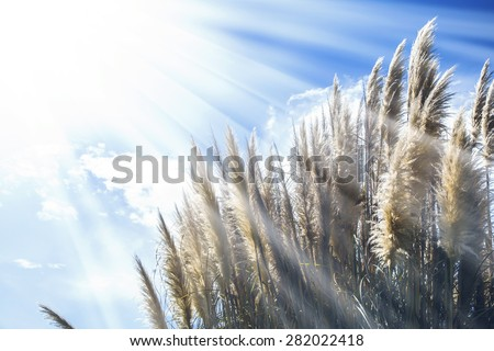 Dry Grass Against Fog by a Lake - stock photo