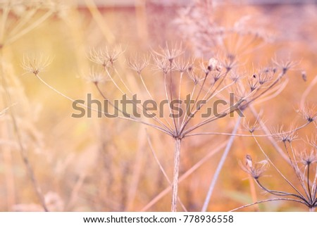 Dry grass at autumn