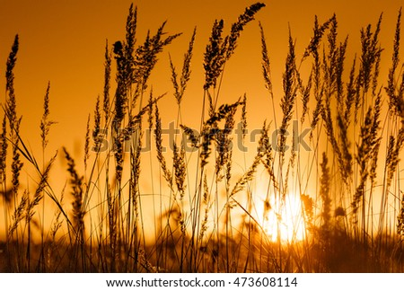 Dry grass at sunset.