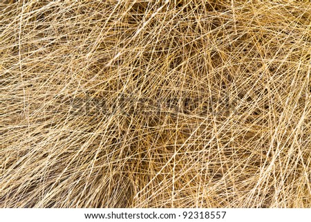 dry grass background - stock photo