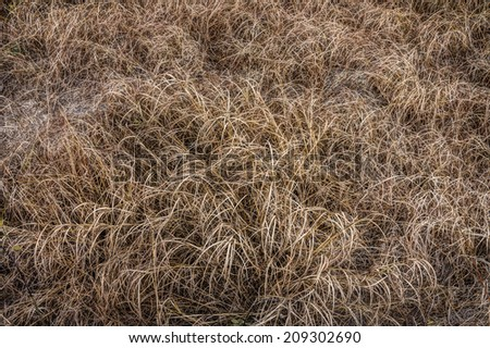 Dry grass field in drought area - stock photo